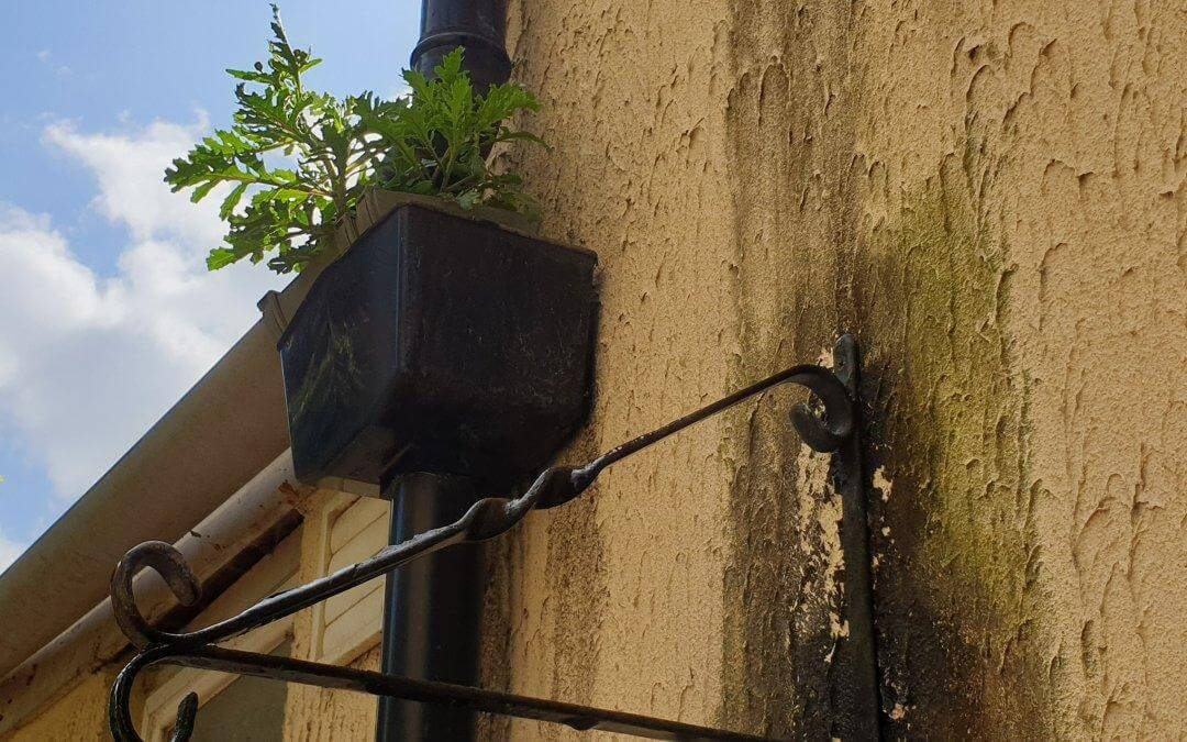 Rain to Drain – Problems with Gutters and Downpipes
