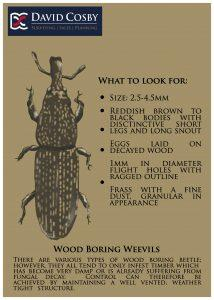 Boring_Weevils