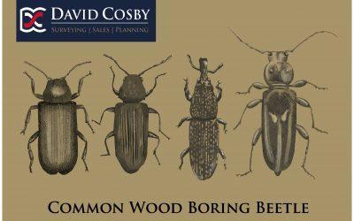 Wood Boring Beetles